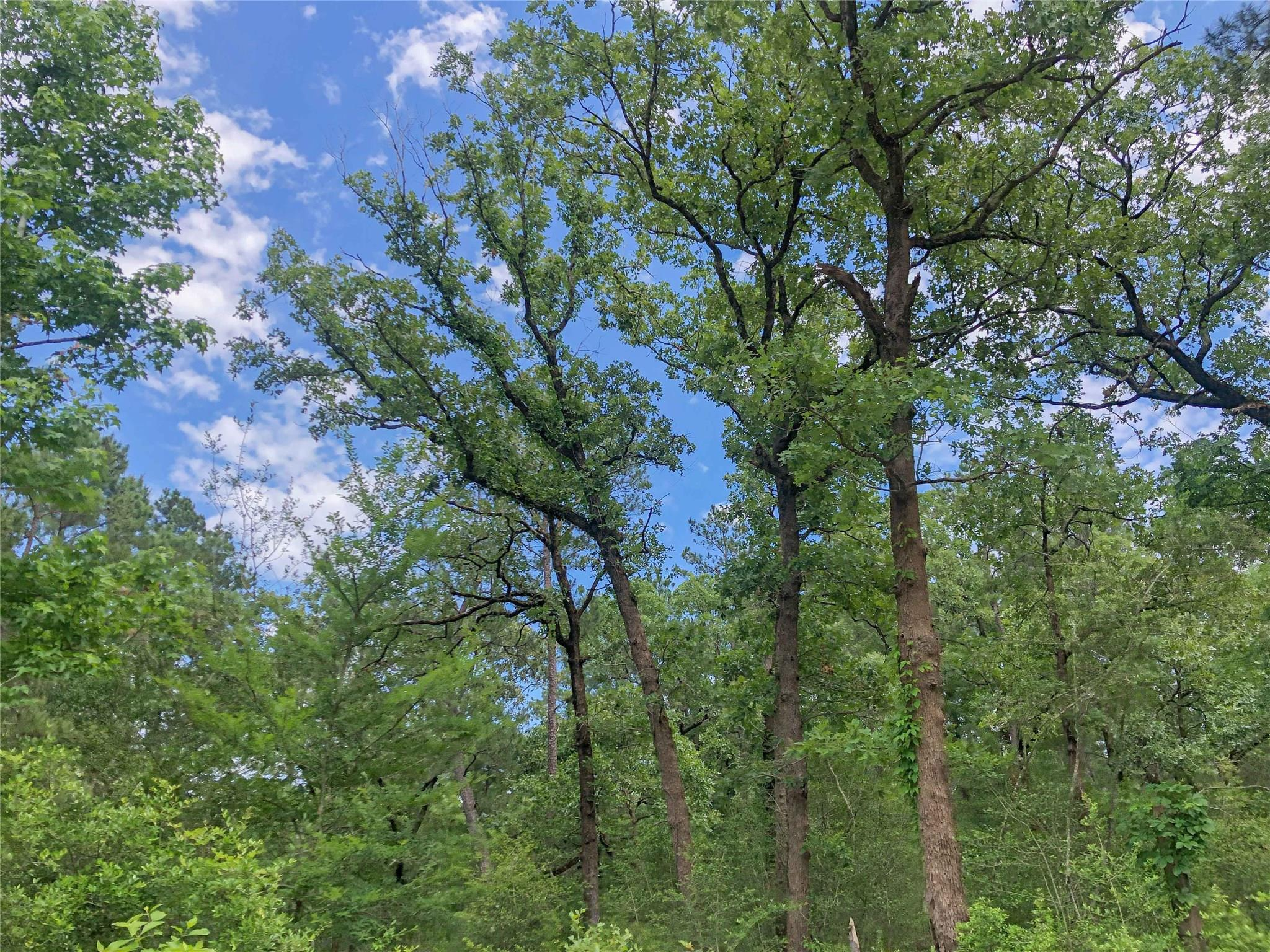 0 Lost Indian Camp Road Property Photo - Huntsville, TX real estate listing