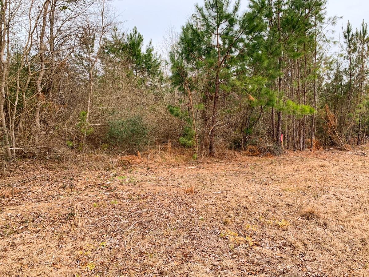 00000 CR 482 Property Photo - Kirbyville, TX real estate listing