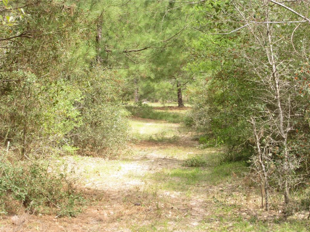 1389 Reese Lane, Columbus, TX 78934 - Columbus, TX real estate listing