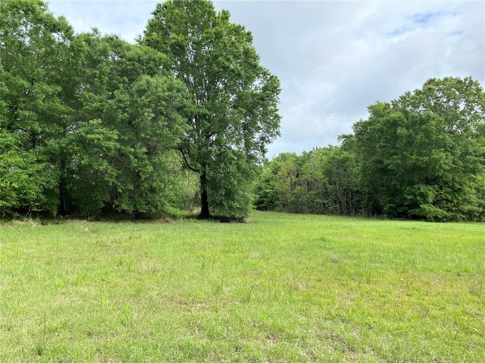 TBD Sun Oil Road Property Photo - Batson, TX real estate listing