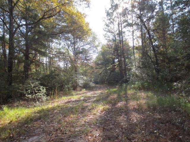 000 CR 3610 Property Photo - Lovelady, TX real estate listing