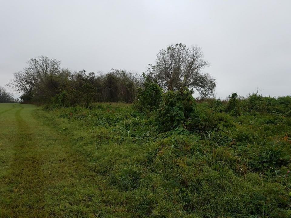 3900 CR 267, Elm Grove, TX 77434 - Elm Grove, TX real estate listing