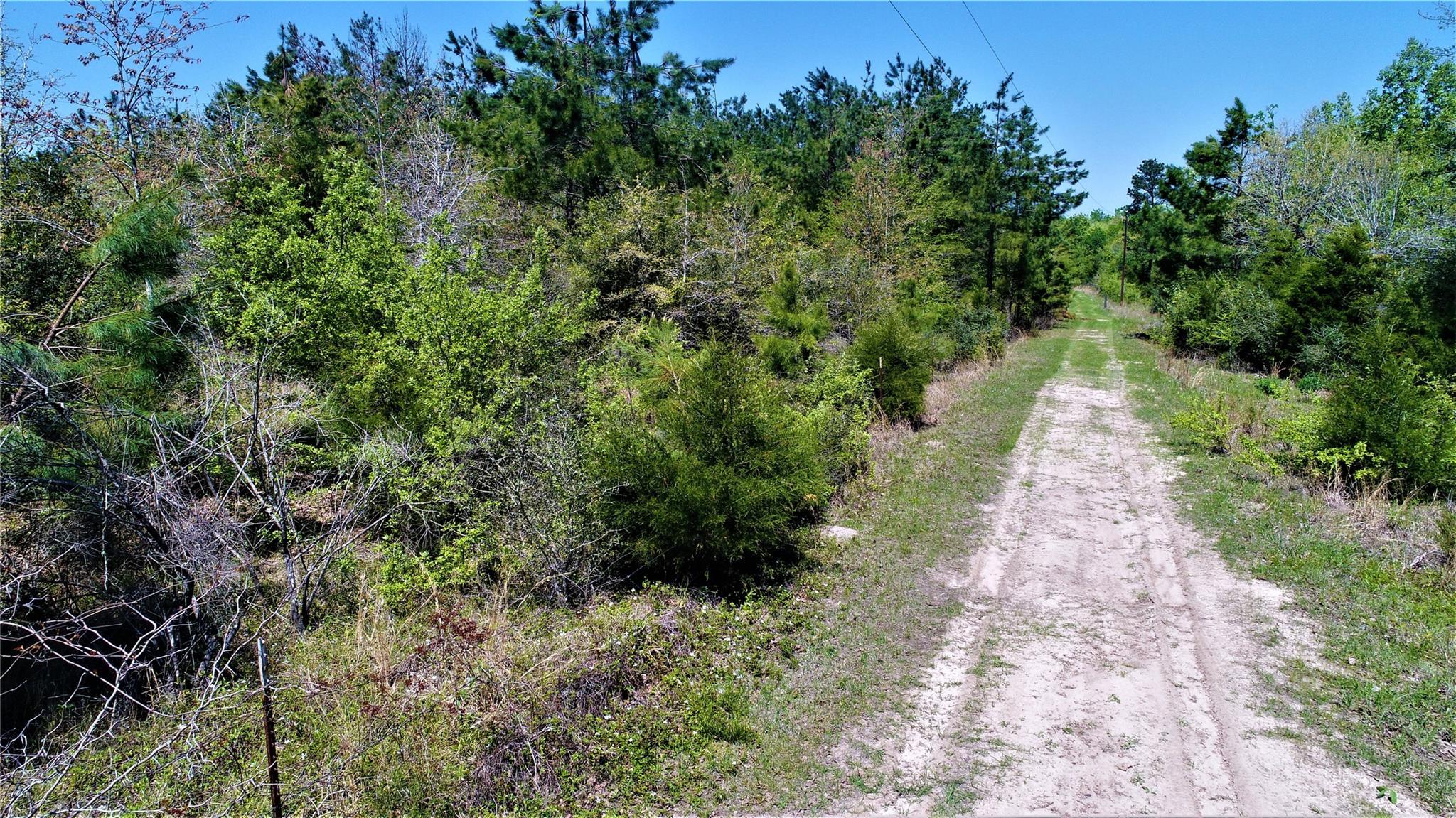 TBD PR 8008 Property Photo - Pennington, TX real estate listing