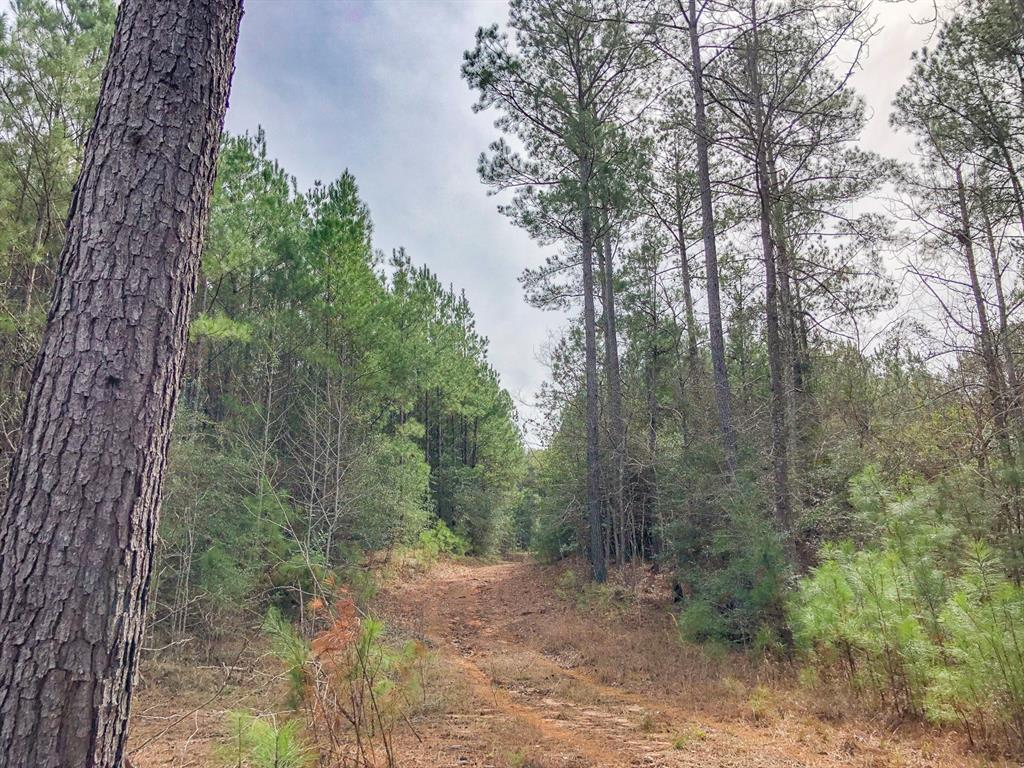 0 Off Fire Tower Road Property Photo - Newton, TX real estate listing