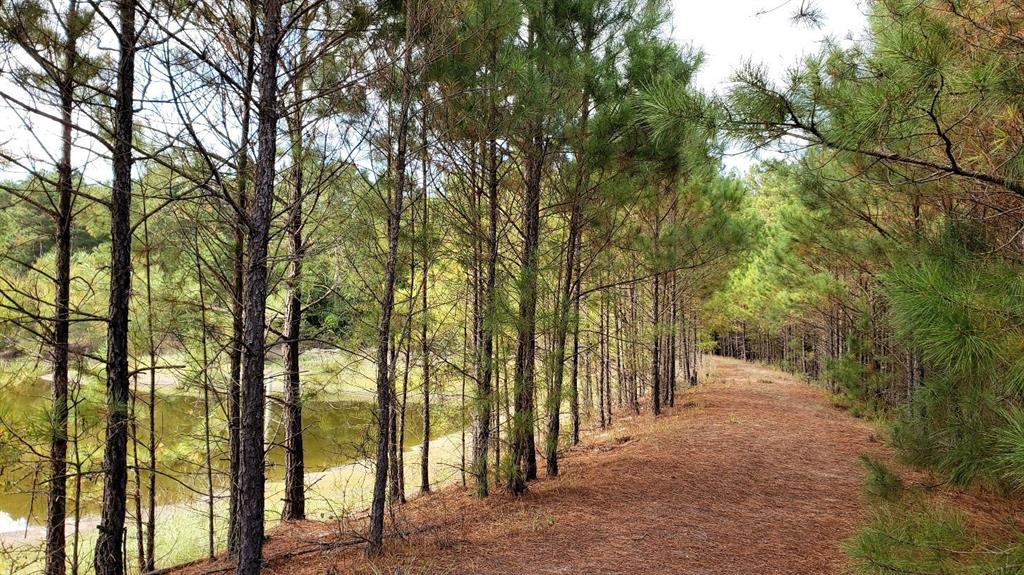 1470 An County Road 483 Property Photo - Palestine, TX real estate listing