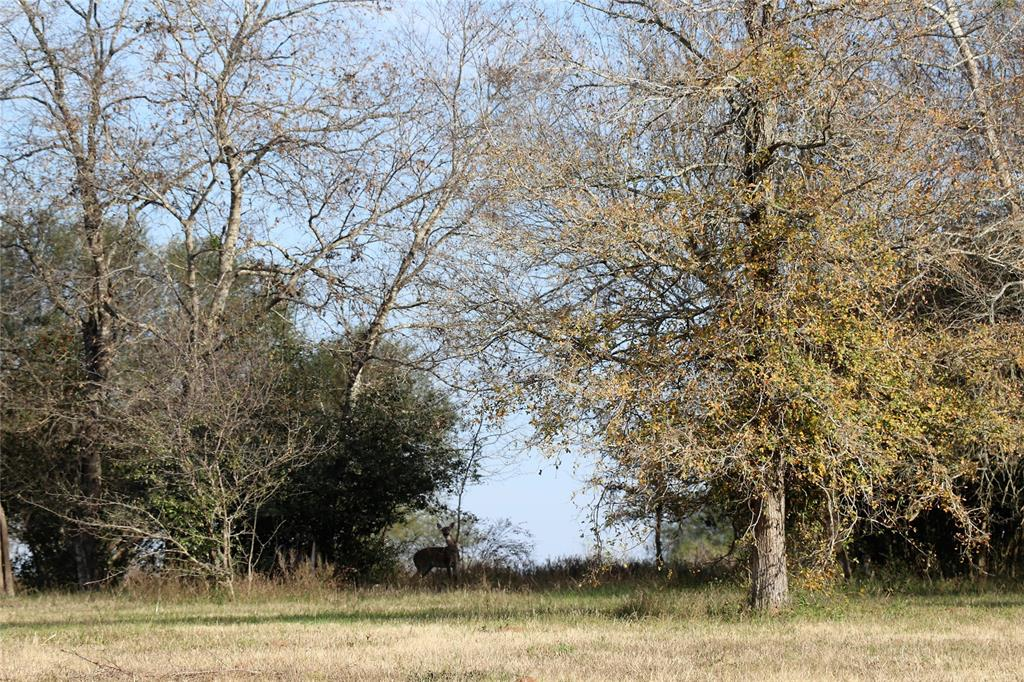 10954 Stefka Road Property Photo - Hempstead, TX real estate listing