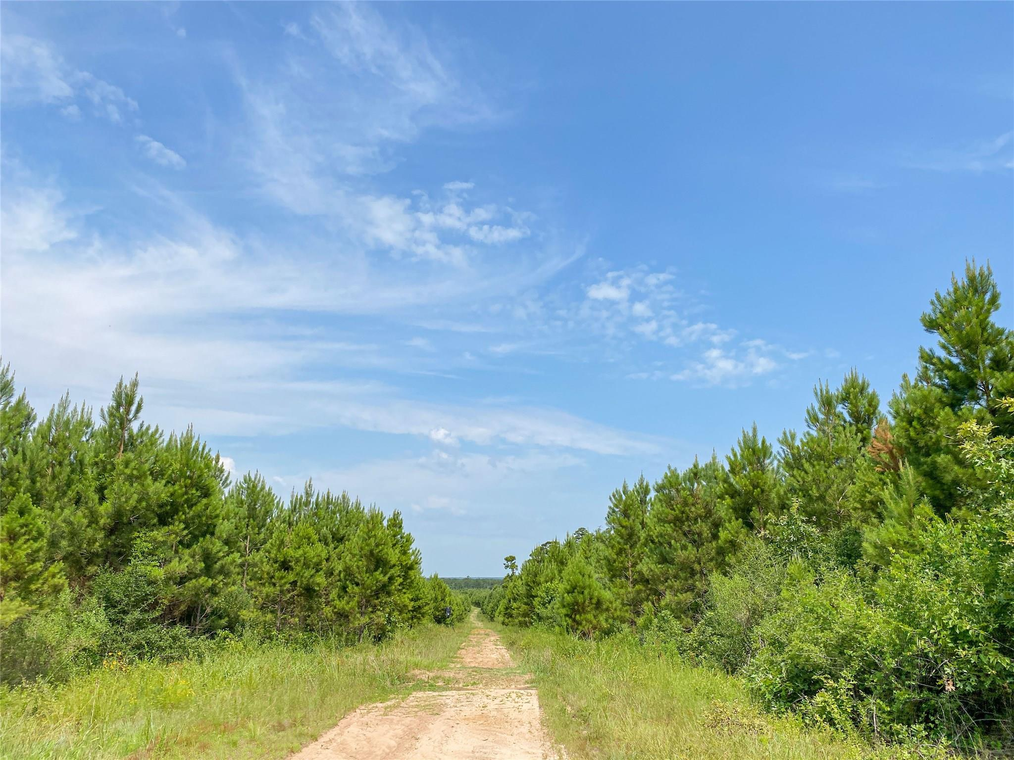 000000 Red Hollow Rd Property Photo - Leggett, TX real estate listing