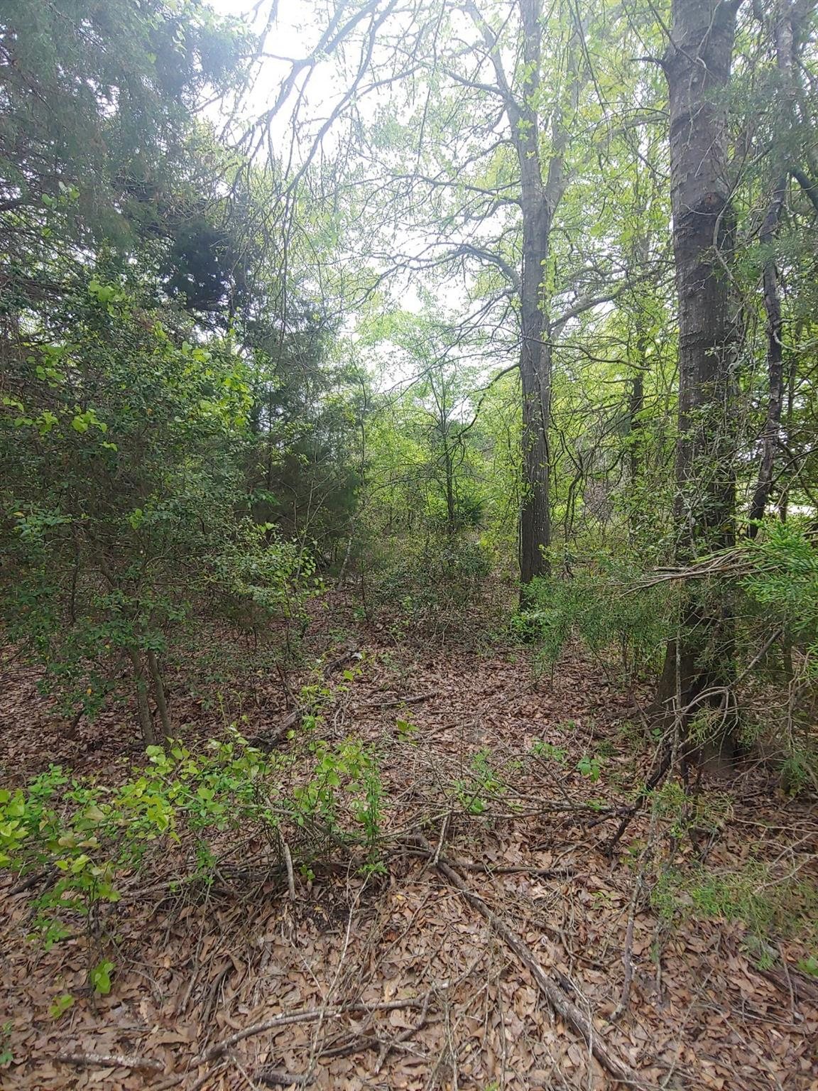0 County Road 274 Property Photo - Bremond, TX real estate listing
