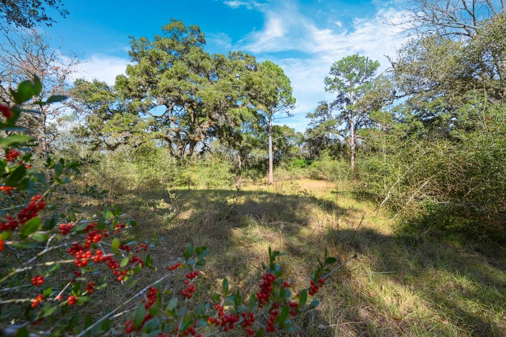 TBD Bass Road Property Photo - Garwood, TX real estate listing