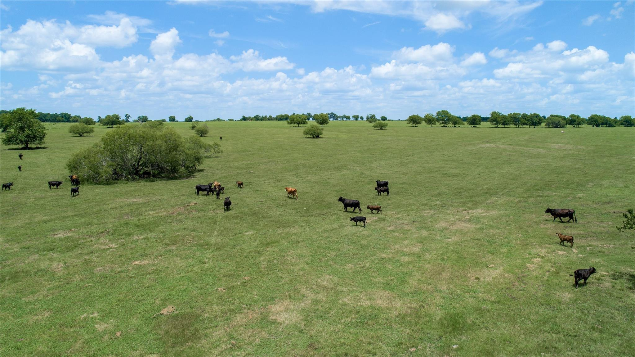 TBD (350 AC) CR 446 Property Photo - Navasota, TX real estate listing