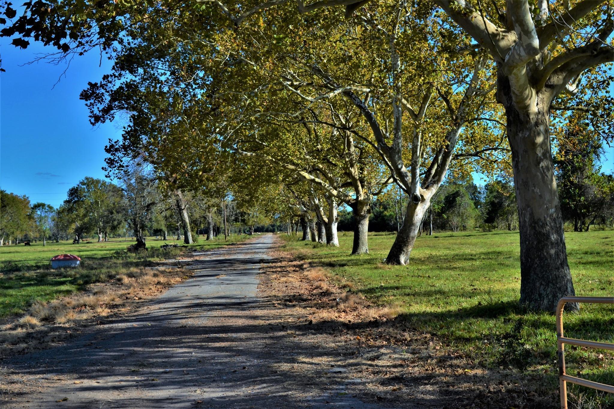 00000 Texasgulf Avenue Property Photo