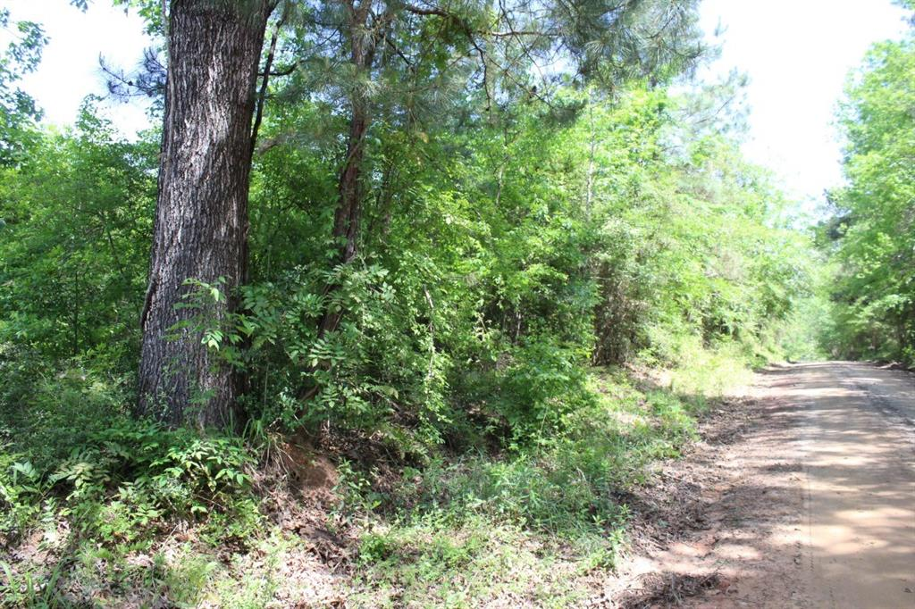 17 ac County Road 1090 Property Photo - Wiergate, TX real estate listing