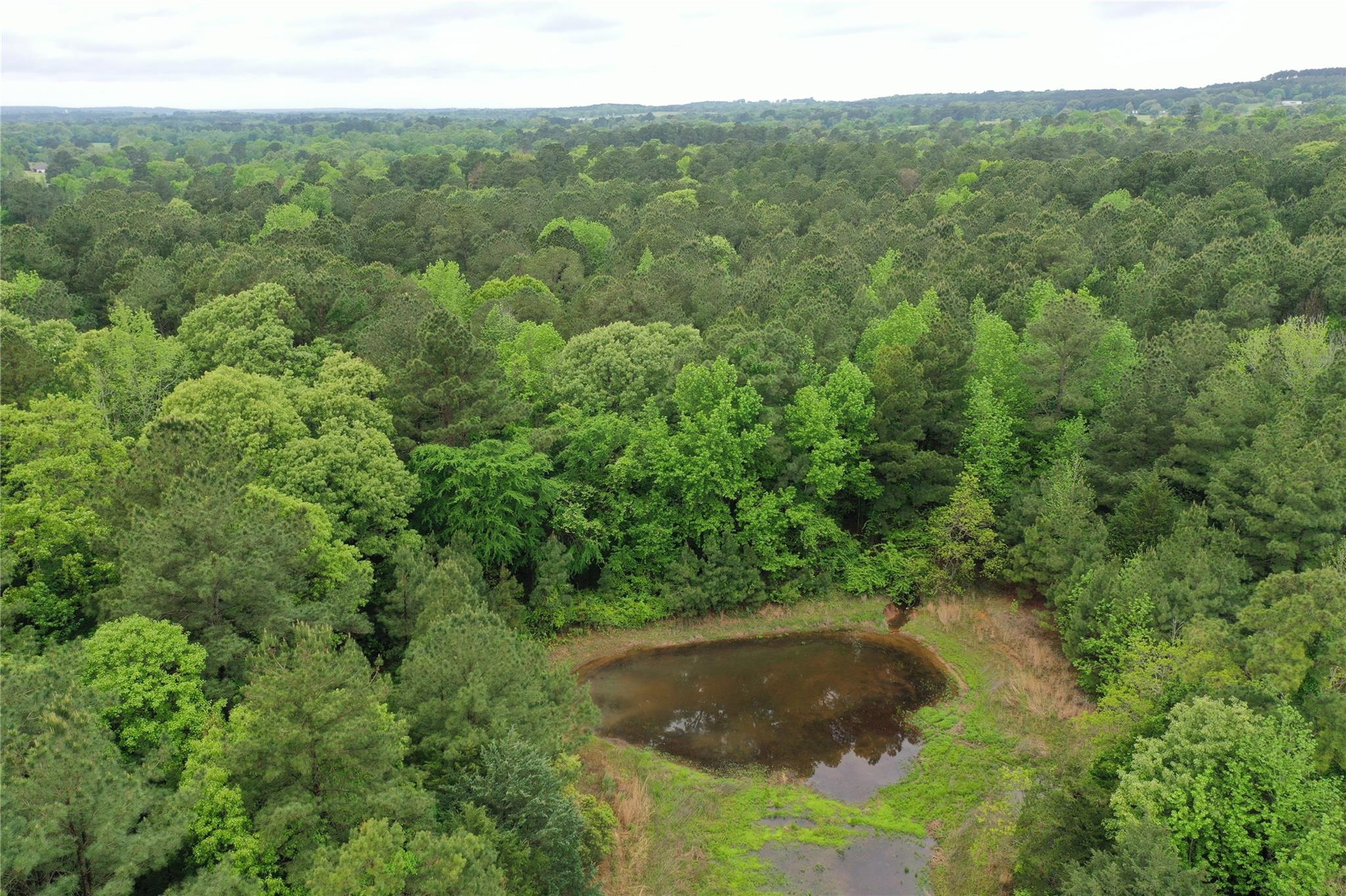 TBD An County Rd 160 Property Photo - Palestine, TX real estate listing