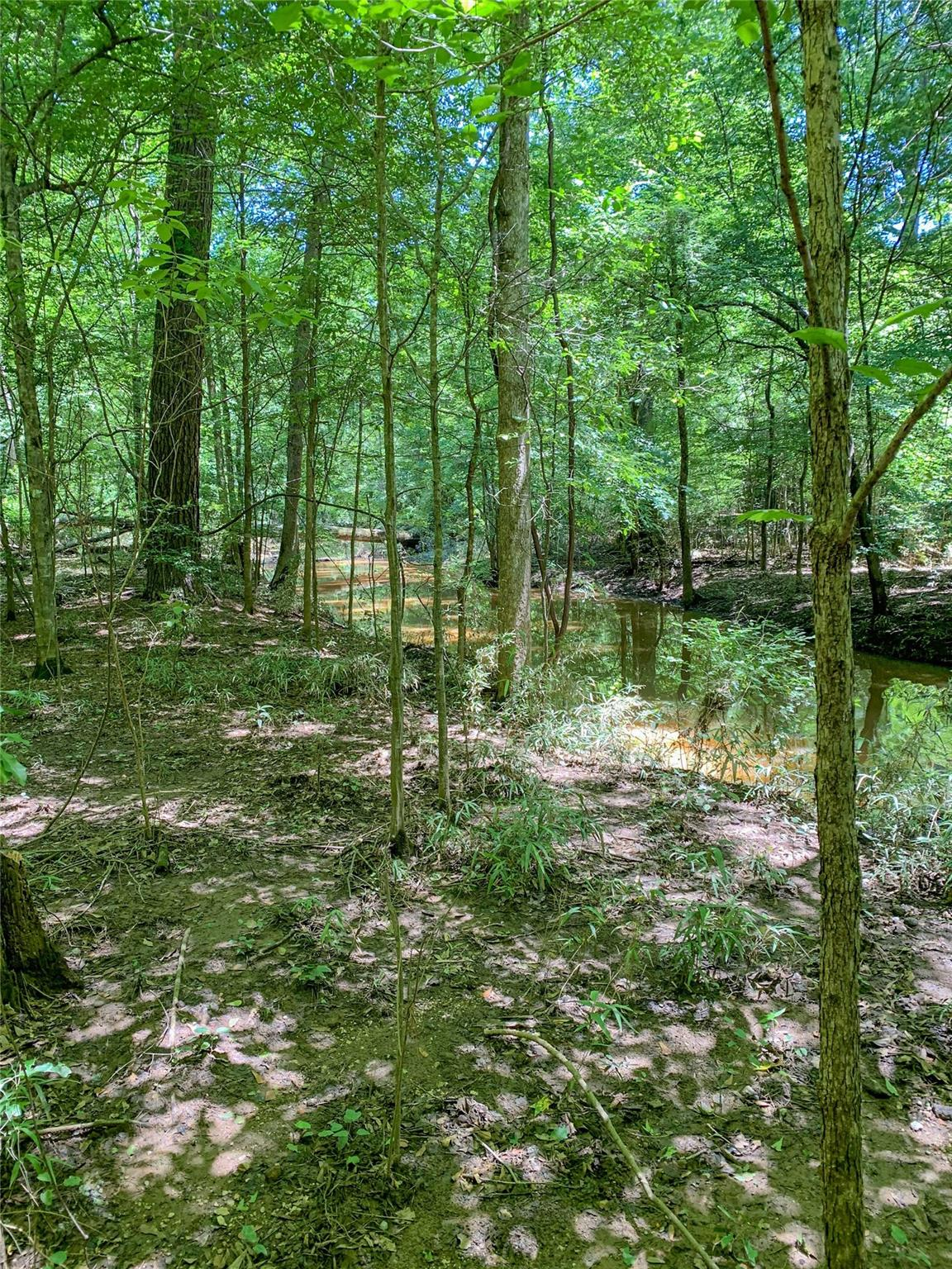 00 Off Fountain Road Property Photo - San Augustine, TX real estate listing