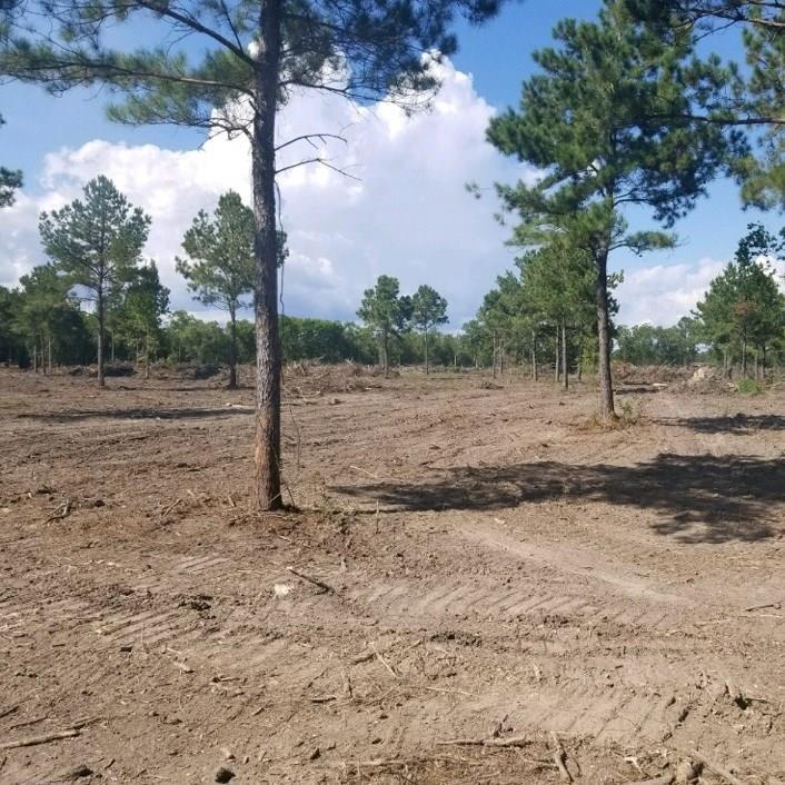 13731 E FM1960 Road E, Huffman, TX 77336 - Huffman, TX real estate listing