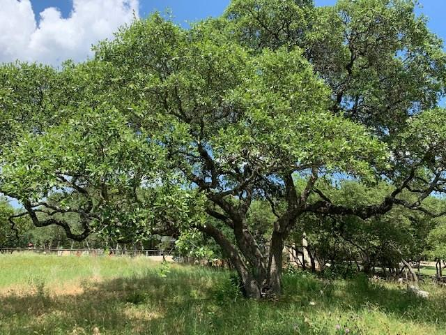 263 Paradise Hills Property Photo - New Braunfels, TX real estate listing