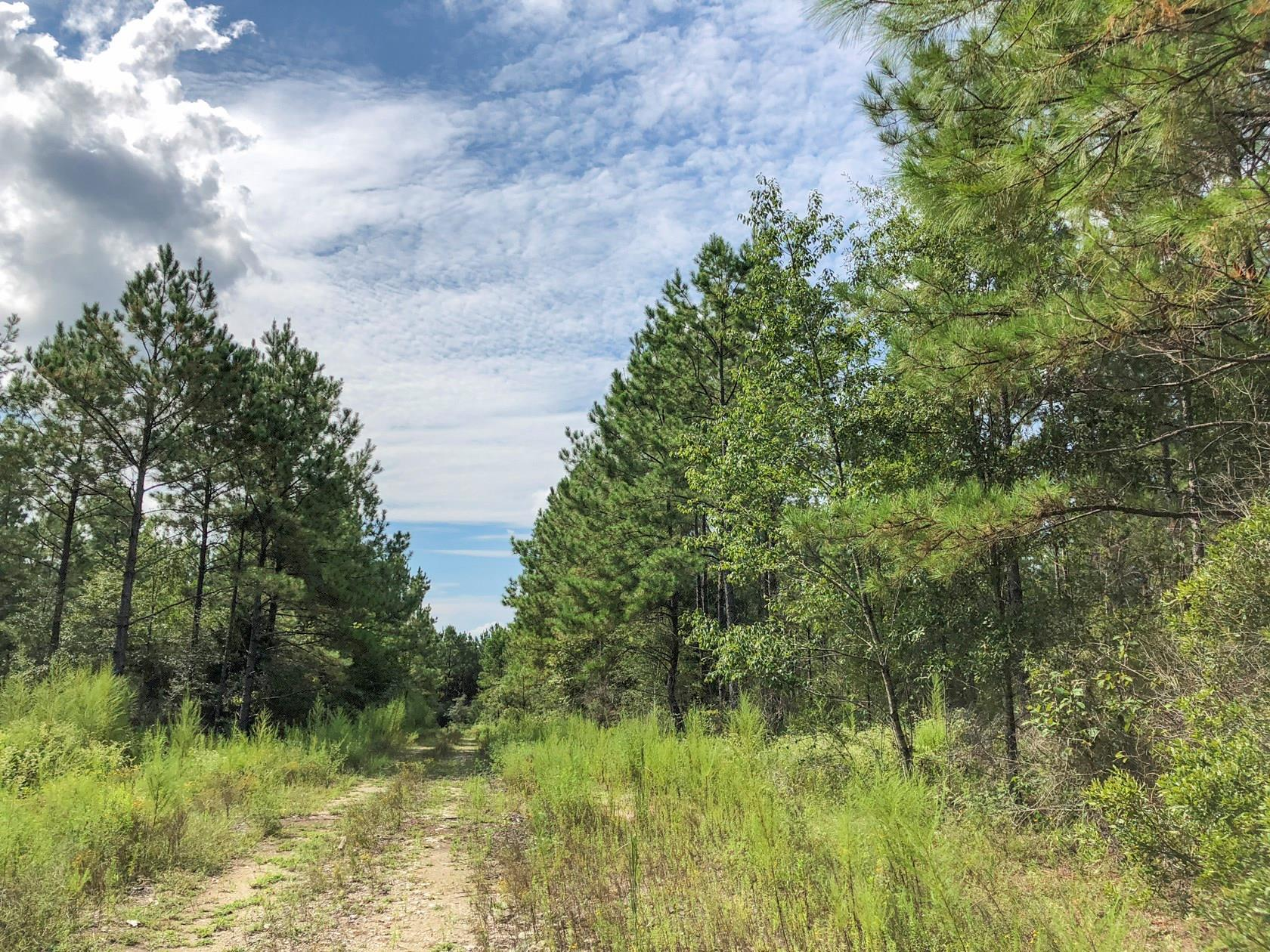 0 CR 4280 Property Photo - Woodville, TX real estate listing