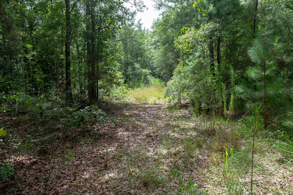 726 County Road 4774 Property Photo - Warren, TX real estate listing