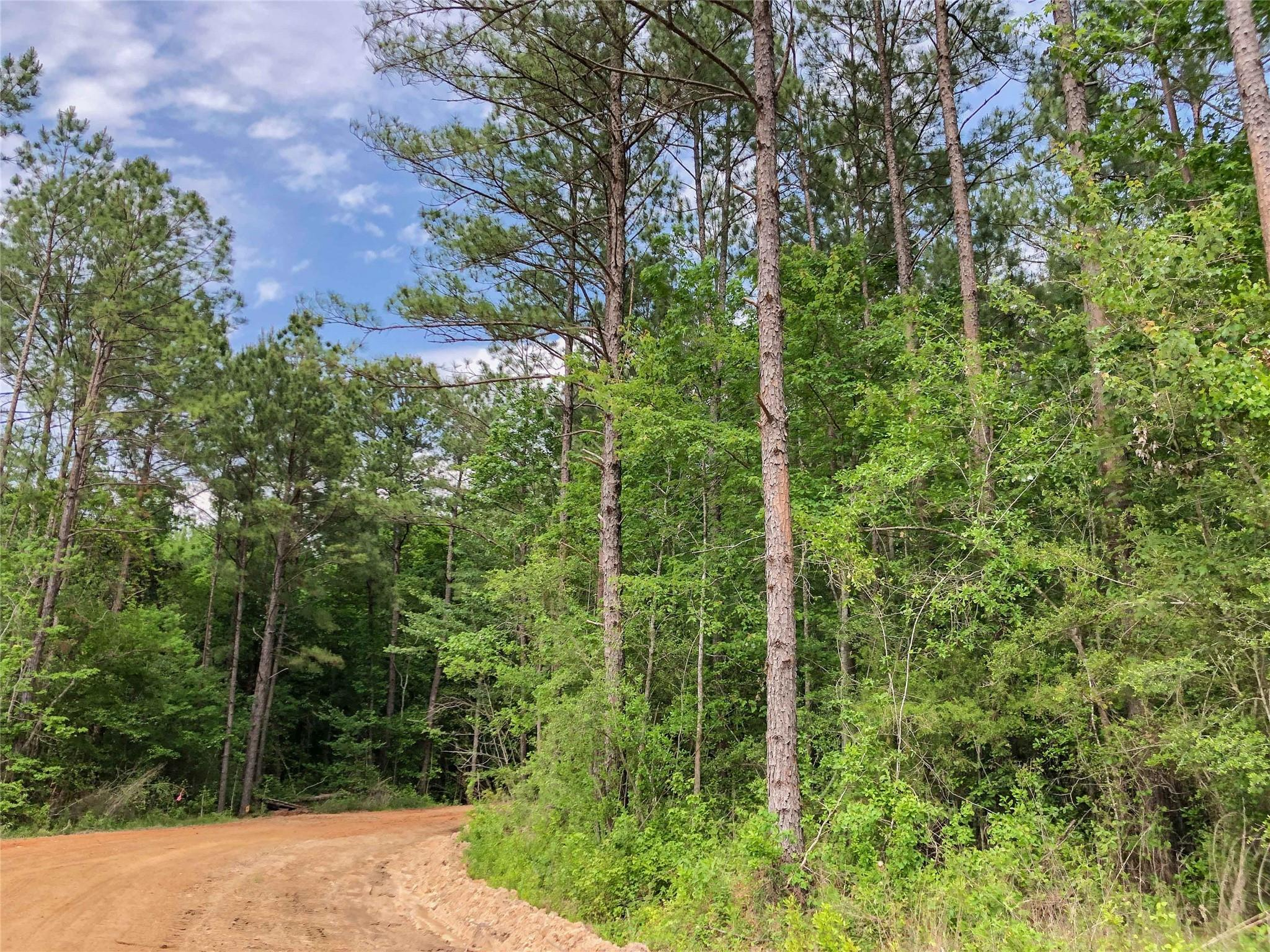 0000 Highway 69 Property Photo - Warren, TX real estate listing