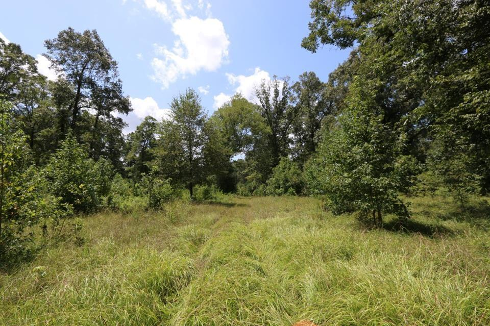 TBD County Road 2082, Burkeville, TX 75932 - Burkeville, TX real estate listing