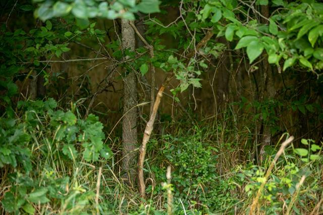 Hoellering Circle Property Photo 24