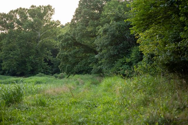 Hoellering Circle Property Photo 25
