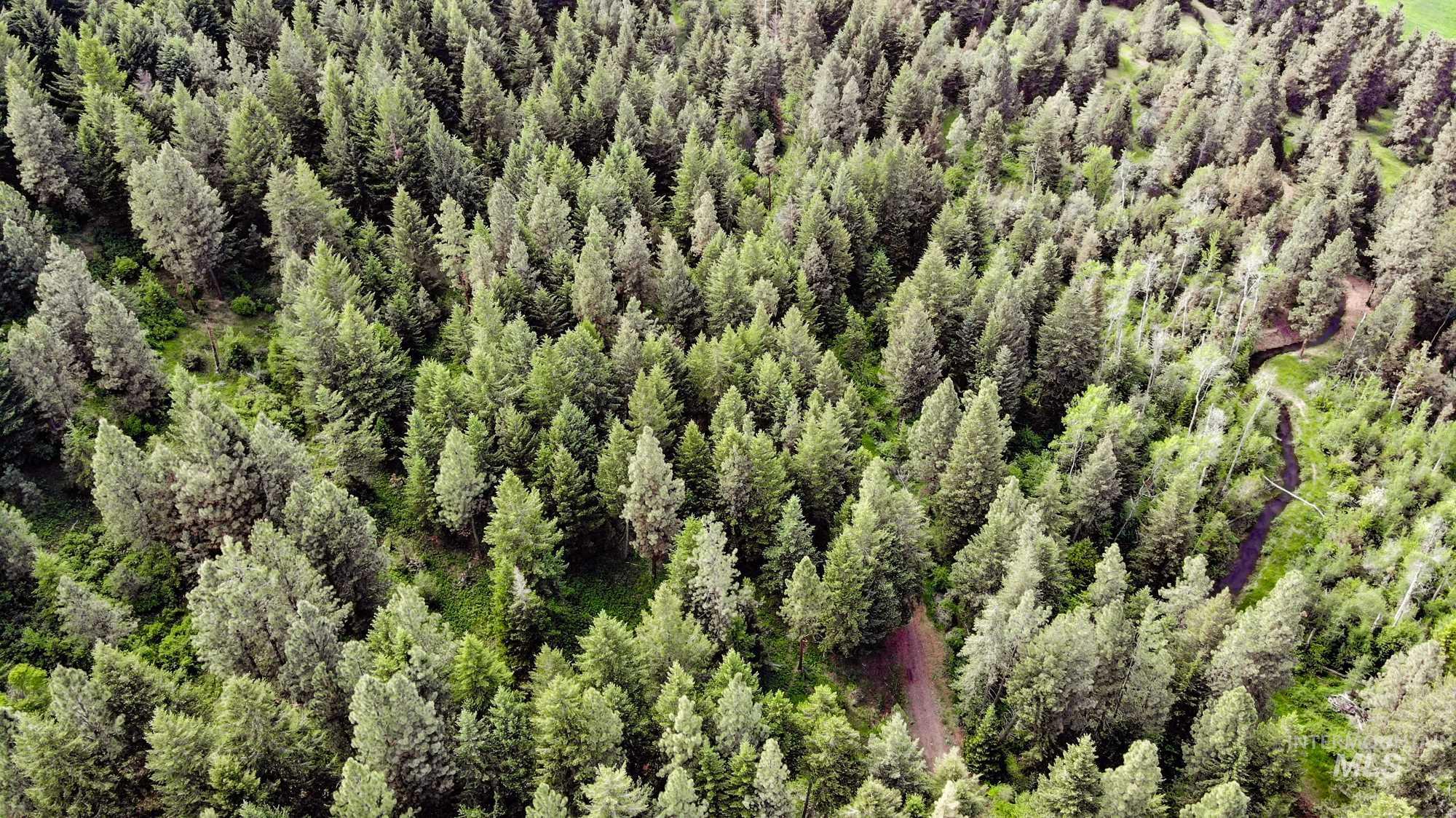 0 Bear Creek Timber Ranch Property Photo - Enterprise, OR real estate listing