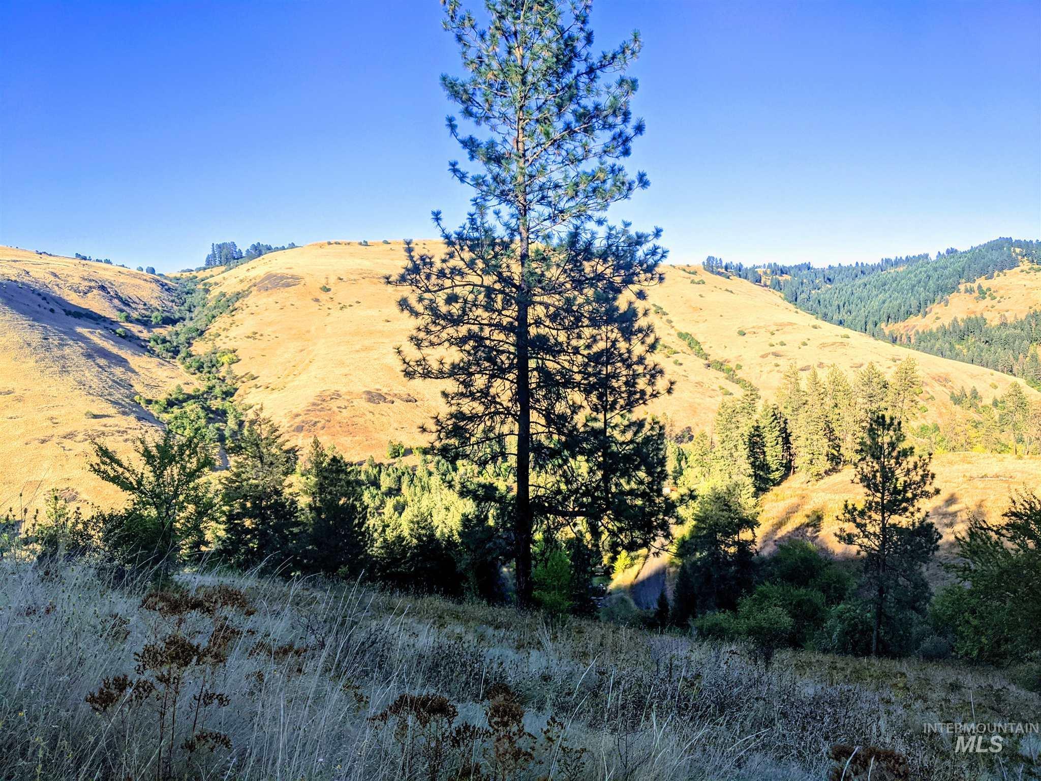 Lot 7 Elk Meadows Subdivision Property Photo - Kooskia, ID real estate listing