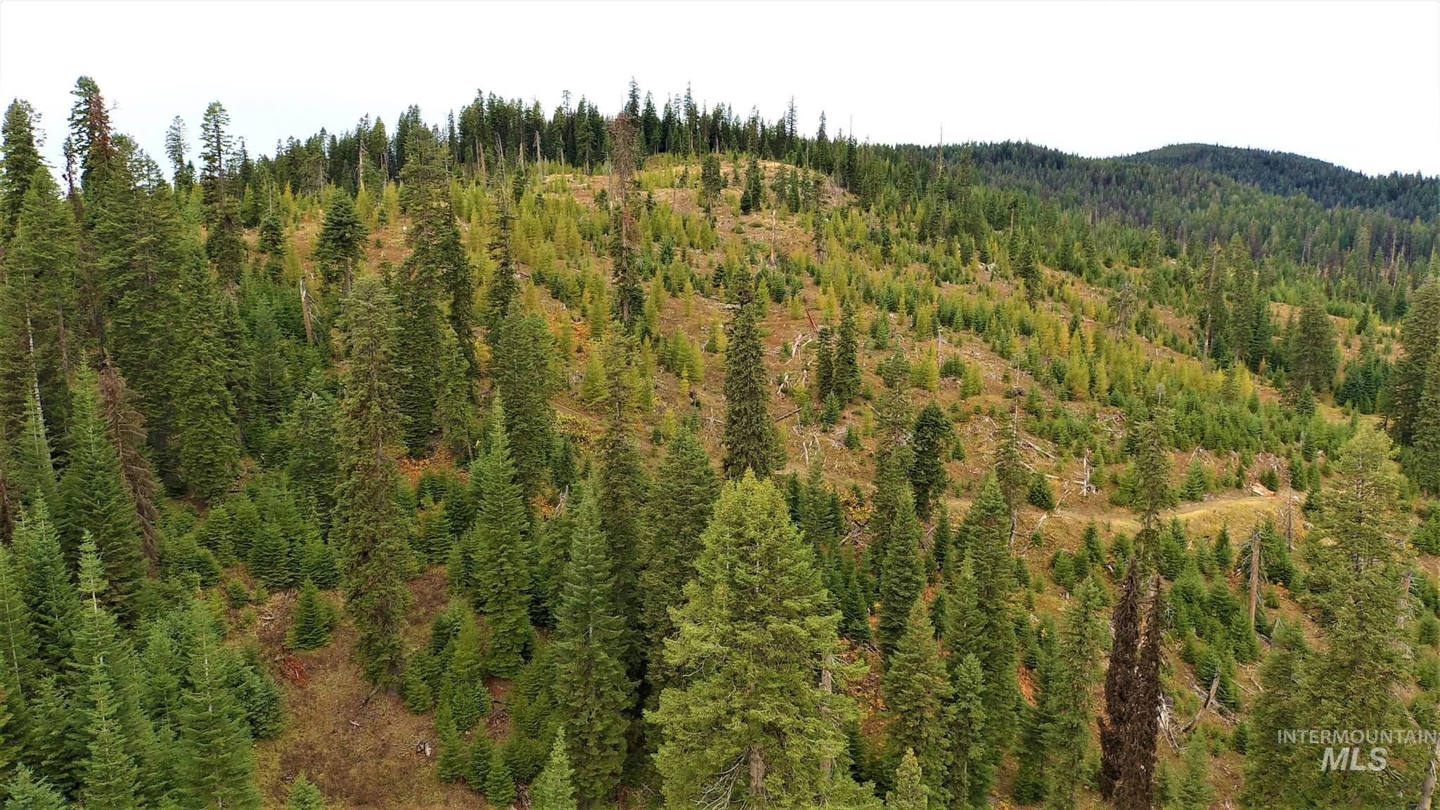 Tbd Elk Summit Properties Parcel 5 Property Photo