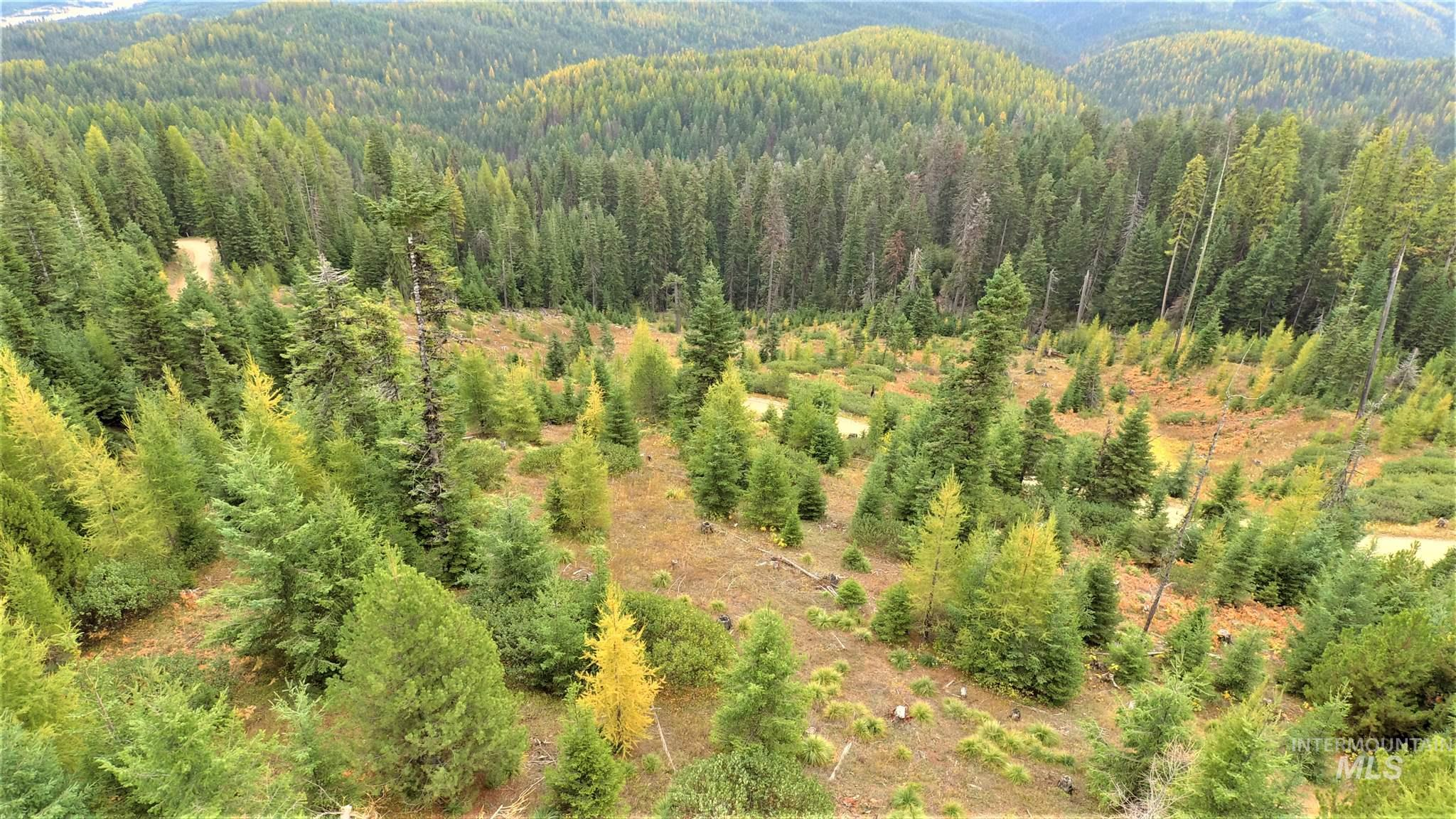 TBD Elk Summit Properties Parcel 6 Property Photo - Elk City, ID real estate listing