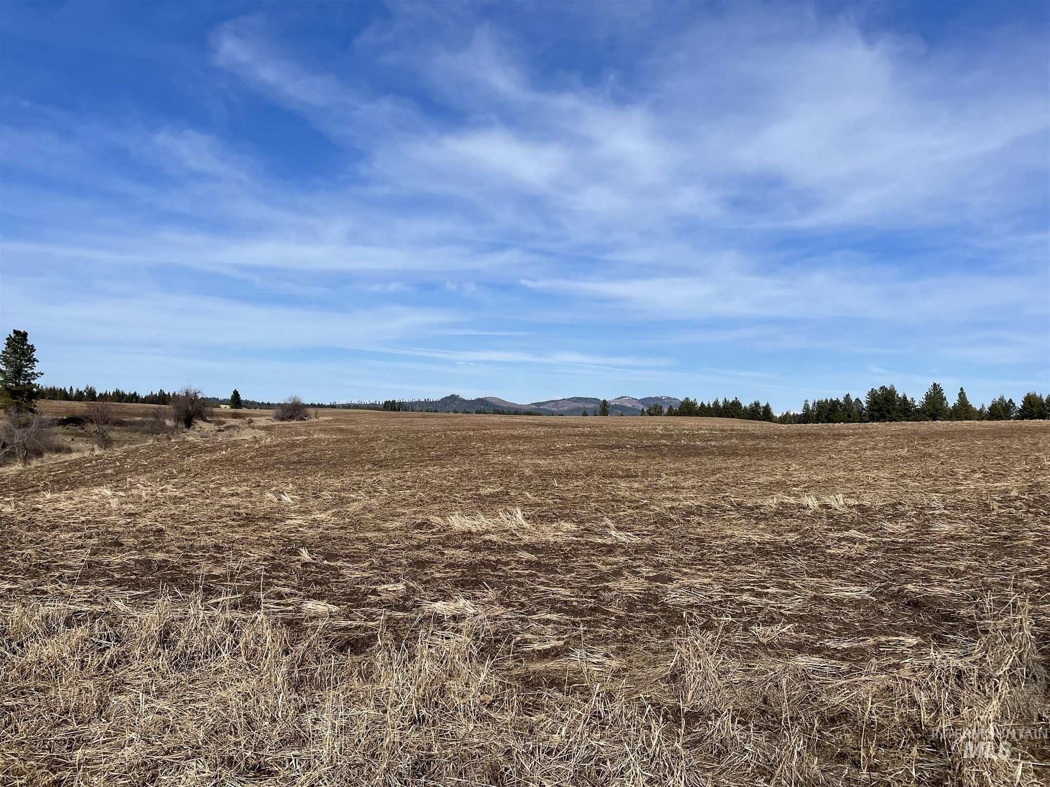 TBD 40 +/- AC East Road Property Photo - Deary, ID real estate listing