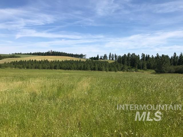 TBD Mill Road Property Photo - Orofino, ID real estate listing