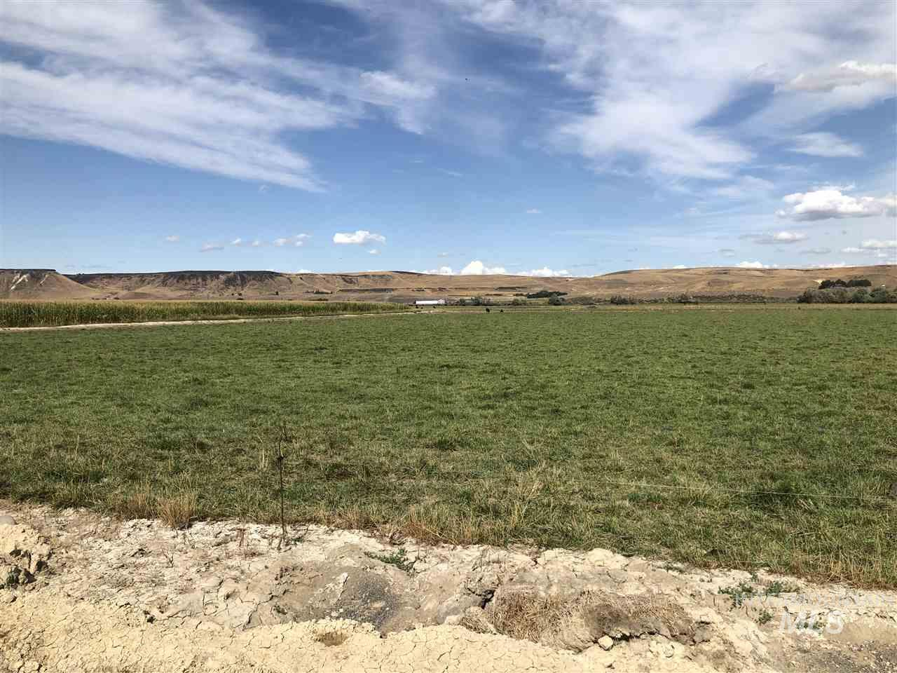 12562 Cattle Drive Property Photo 6