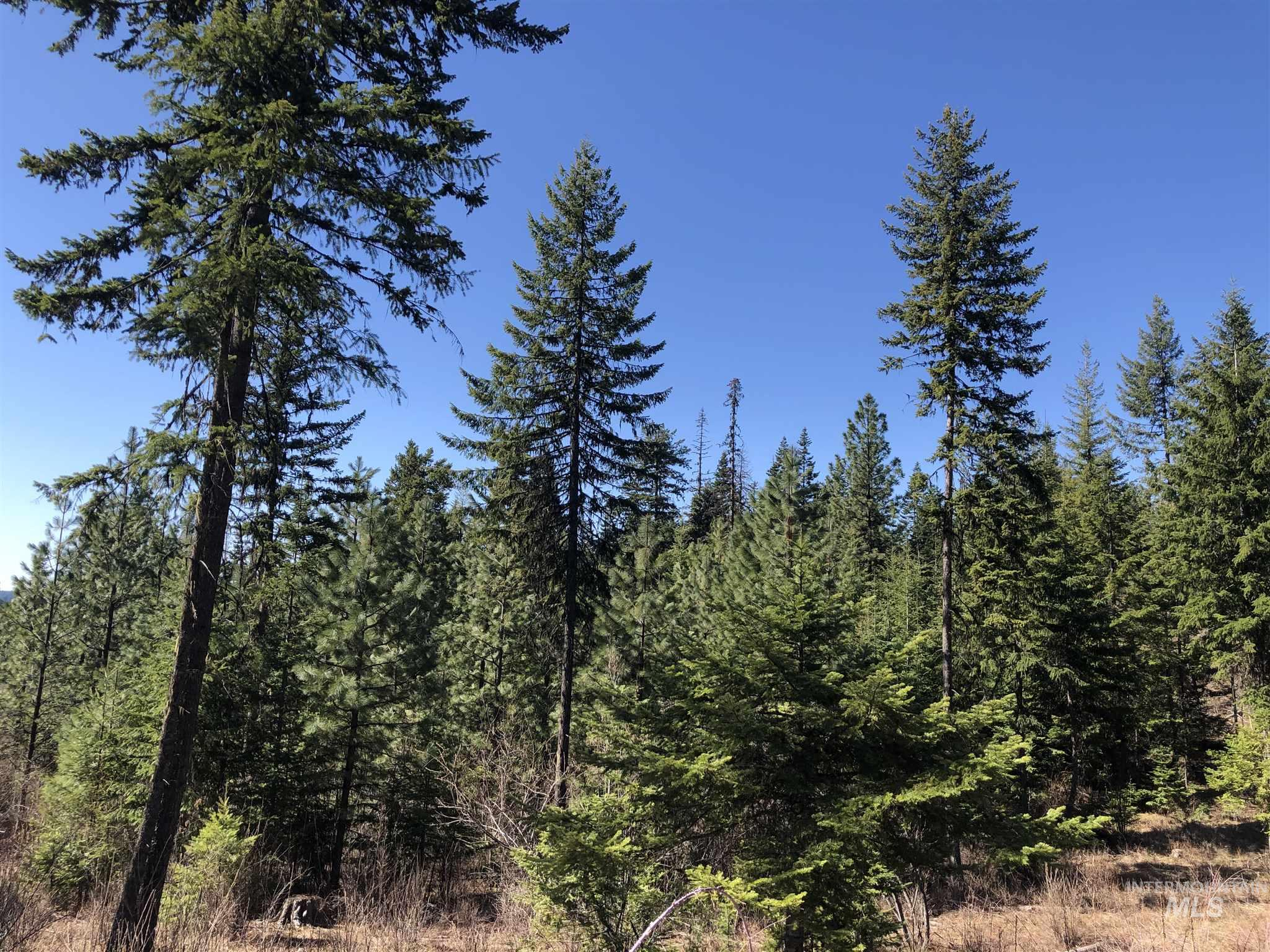 31 Bugle Ridge Property Photo - Orofino, ID real estate listing