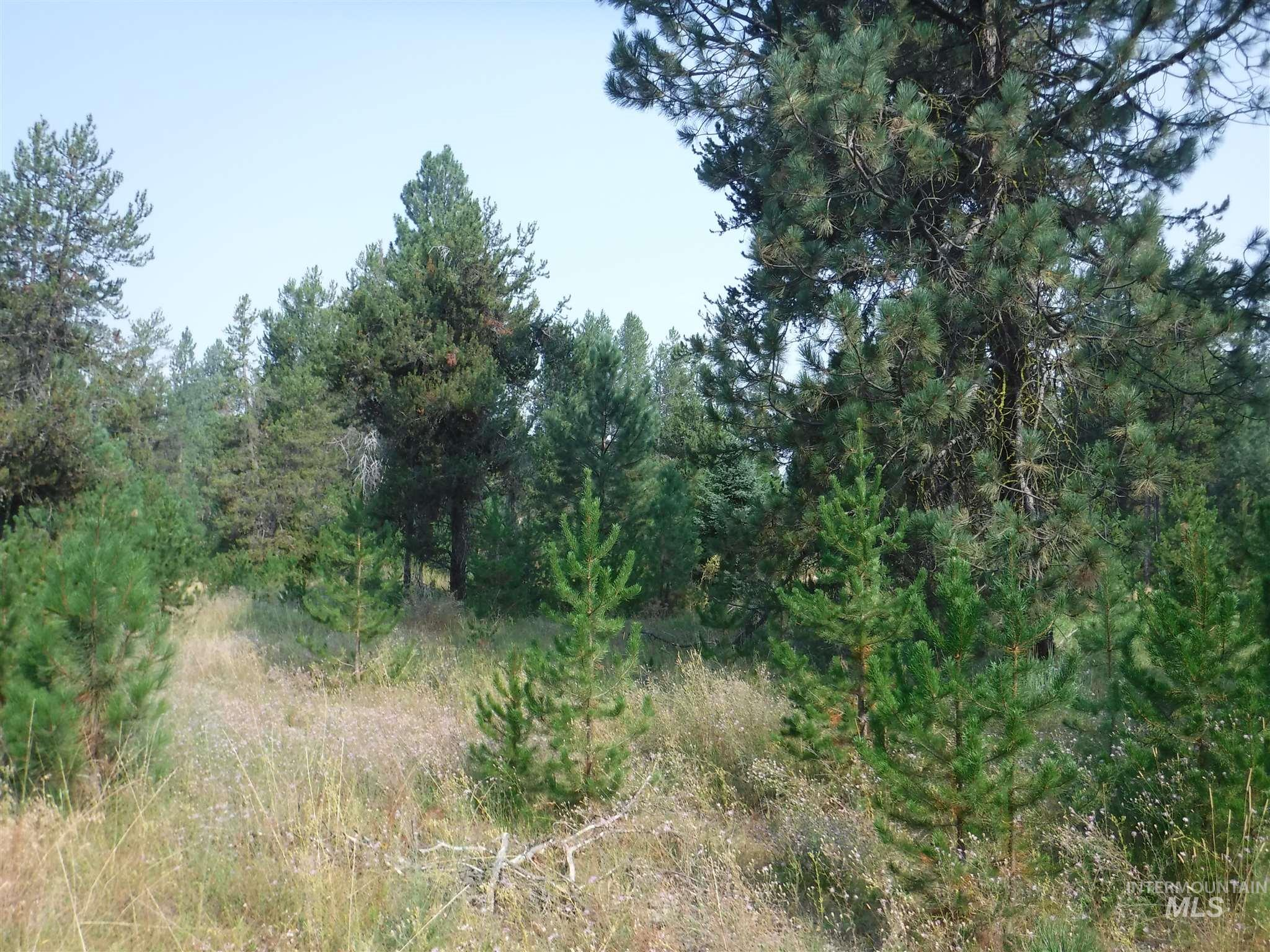TBD Lot 2 Mineral Dr Property Photo - Cascade, ID real estate listing