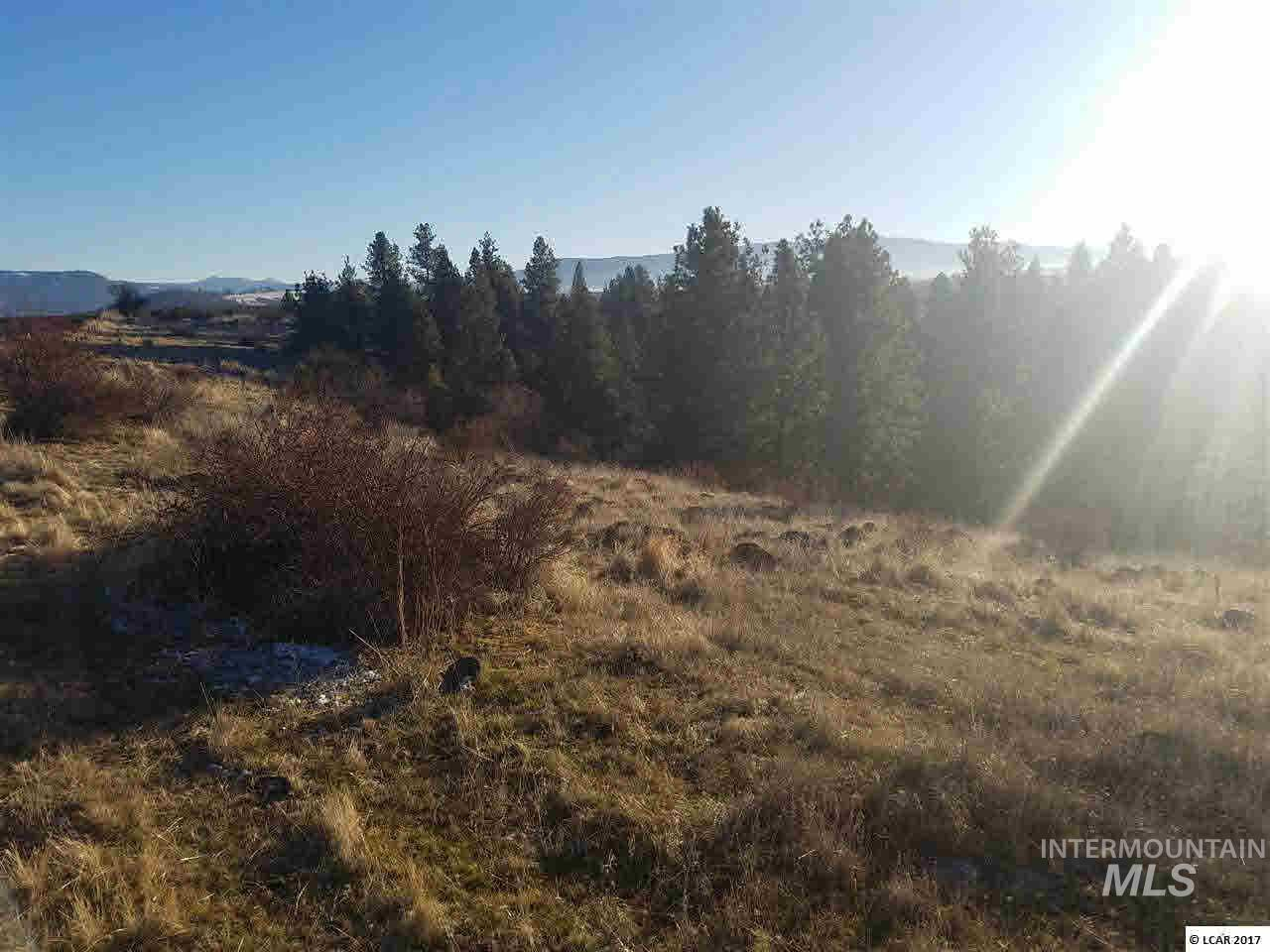 TBD Lukes Gulch Property Photo - Grangeville, ID real estate listing