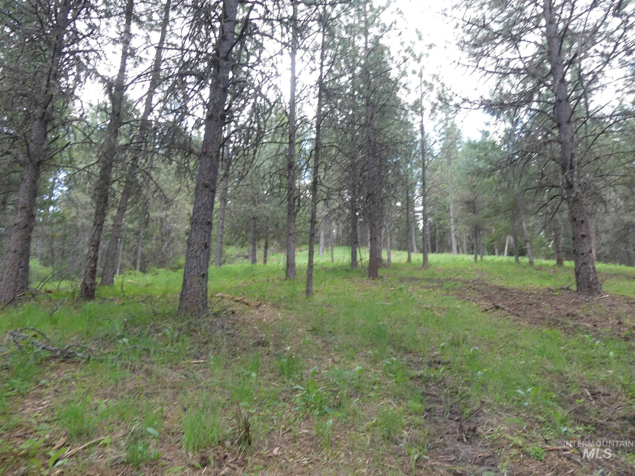 22741 Old Melrose Grade Property Photo - Peck, ID real estate listing