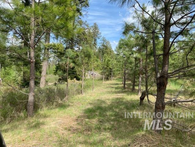 1015 White Pine Flats Property Photo 45