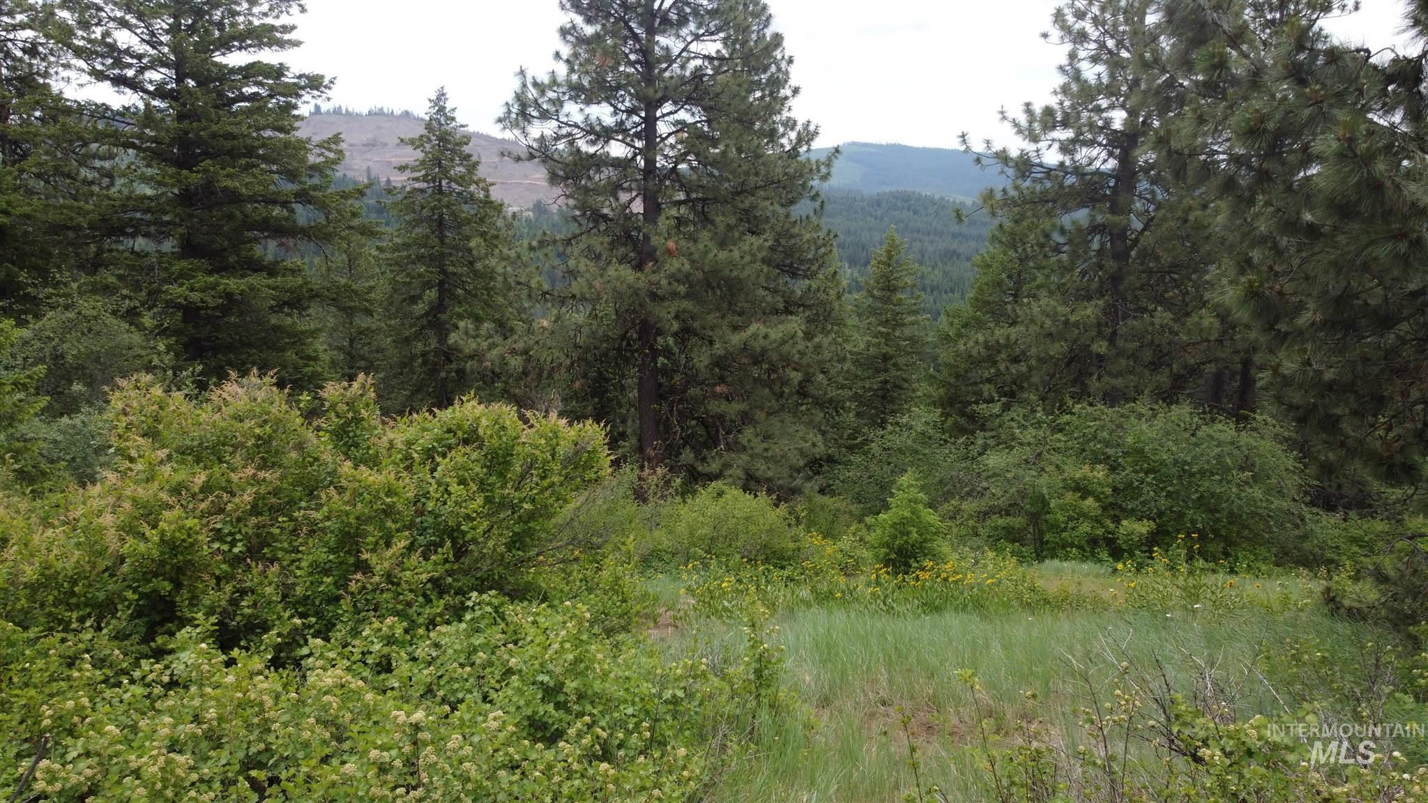Tbd Three Bear Road Property Photo 1