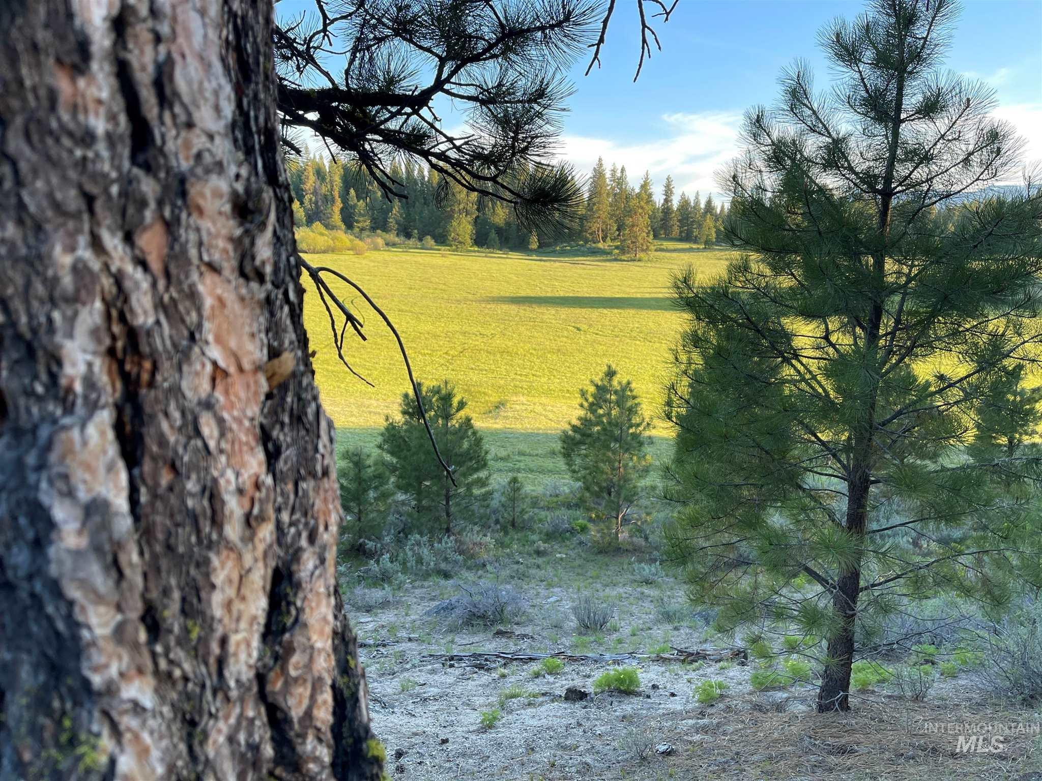 1812 Acres - Big Creek Meadows Ranch Property Photo 7