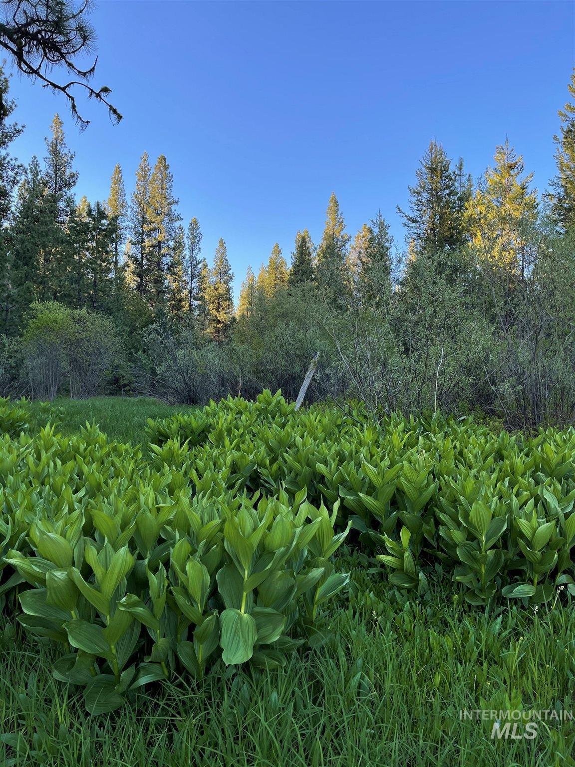 1812 Acres - Big Creek Meadows Ranch Property Photo 8