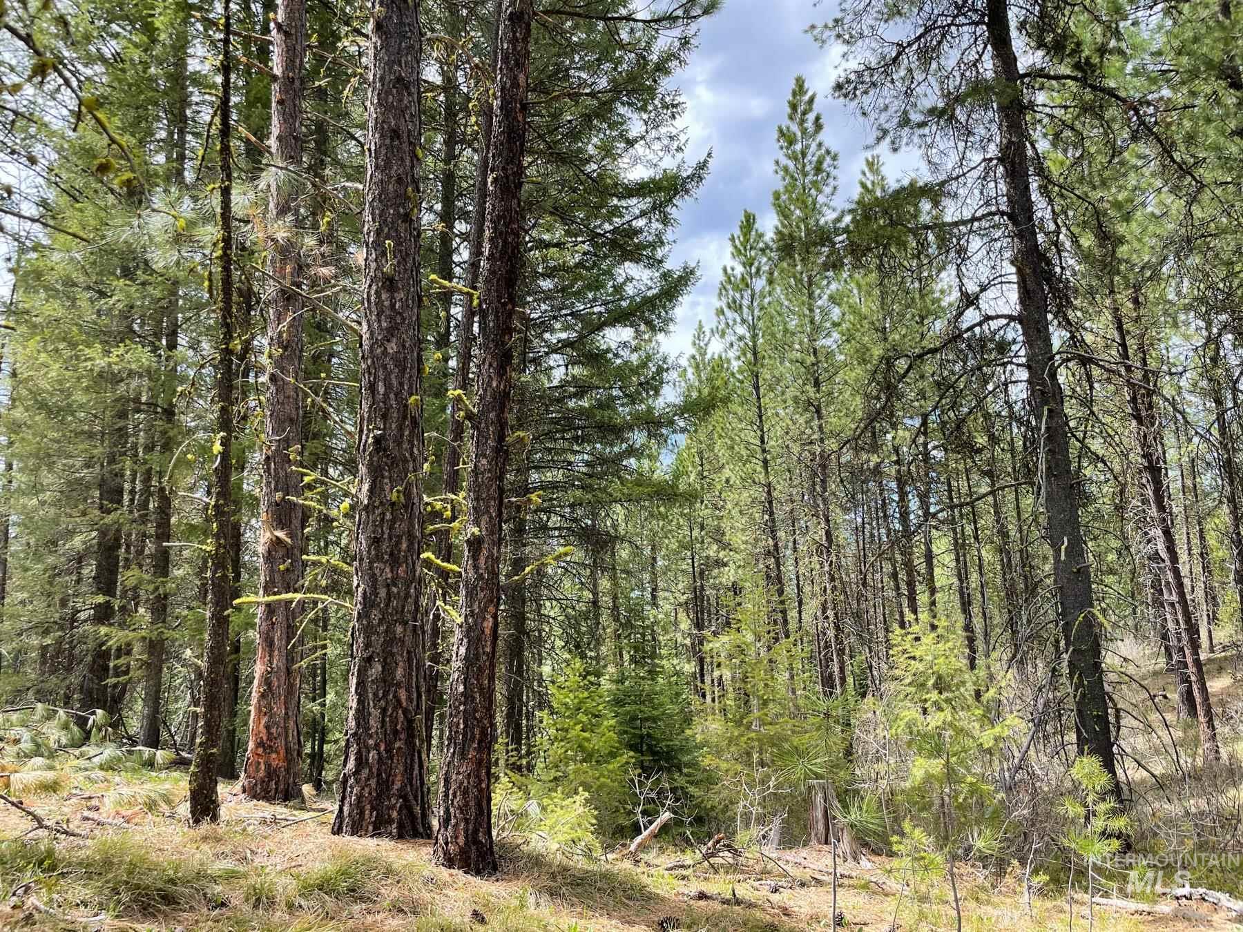 000 Corral Creek Road Property Photo
