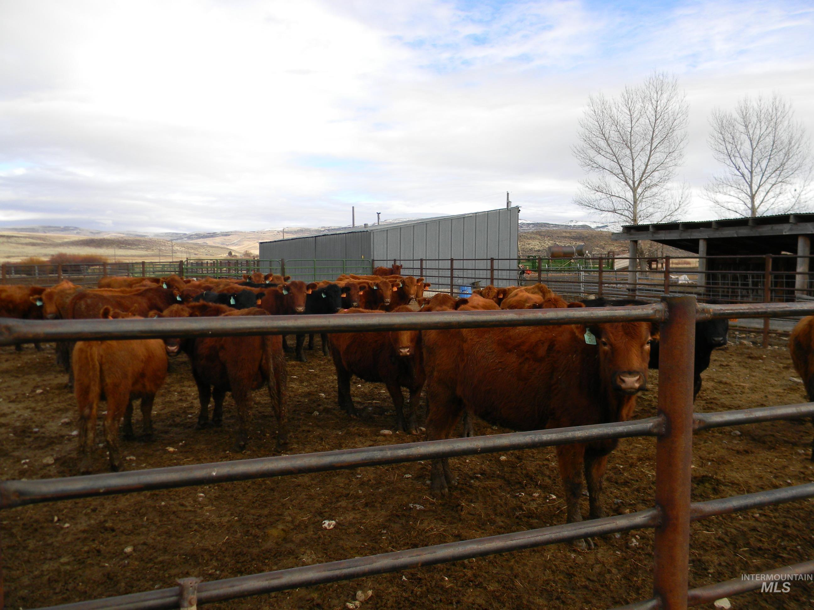 2015 Cow Creek Rd. Property Photo 10