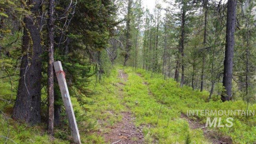 94ac Thunder City Rd (back Country) Property Photo