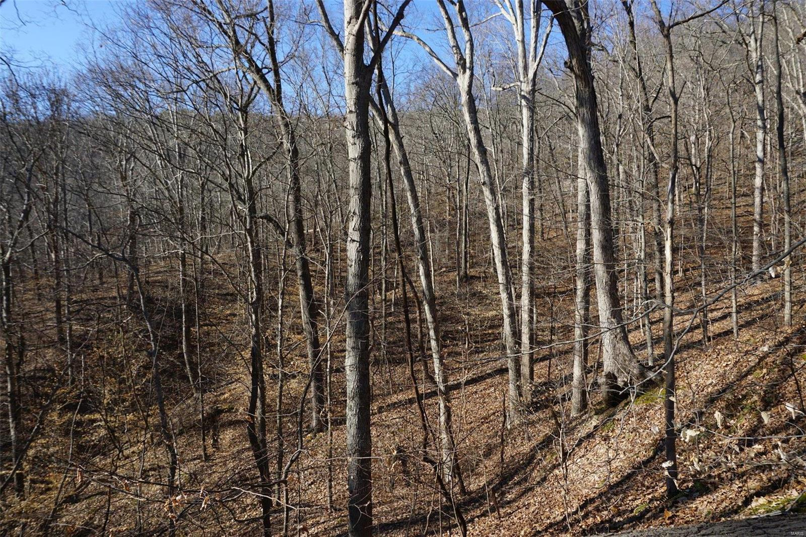 0 Chestnut Property Photo - Alto Pass, IL real estate listing