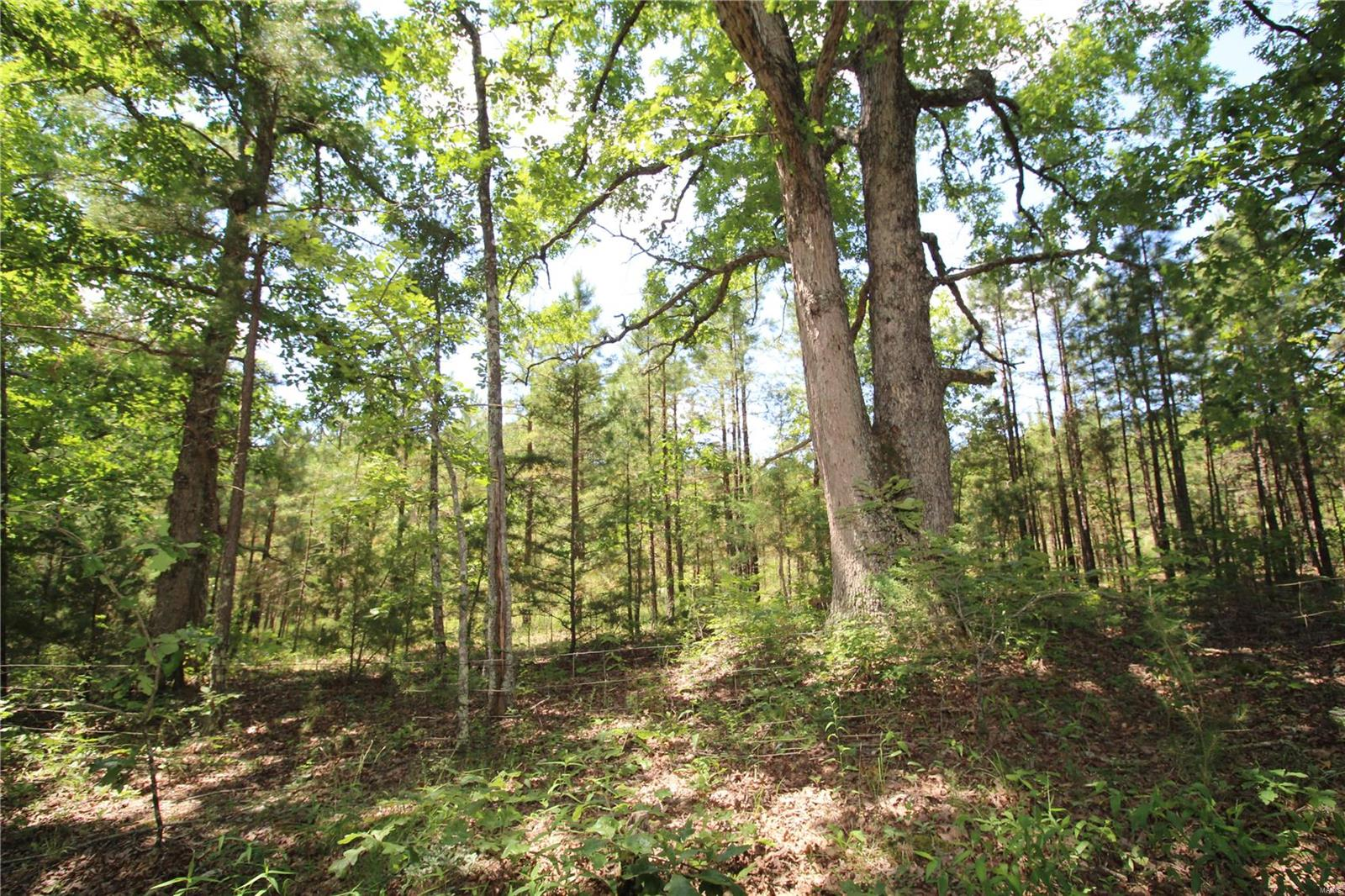 0 Antioch Road Property Photo - Licking, MO real estate listing