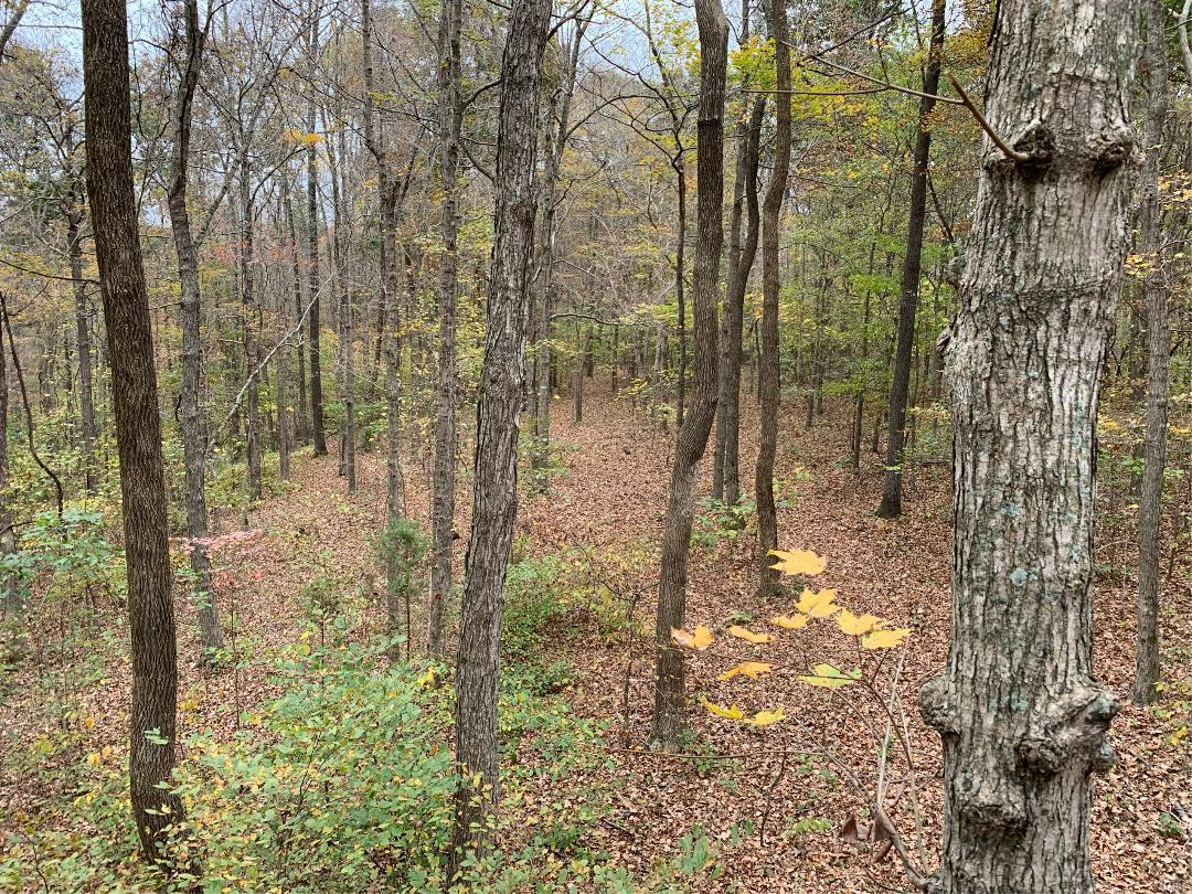 0 Off CR 500 Property Photo - Marble Hill, MO real estate listing