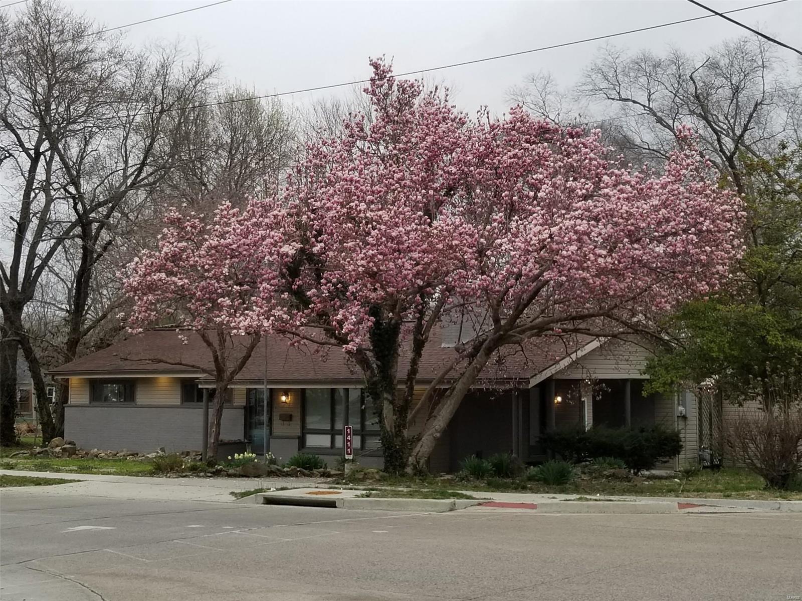 1411 E St Louis Street Property Photo 1