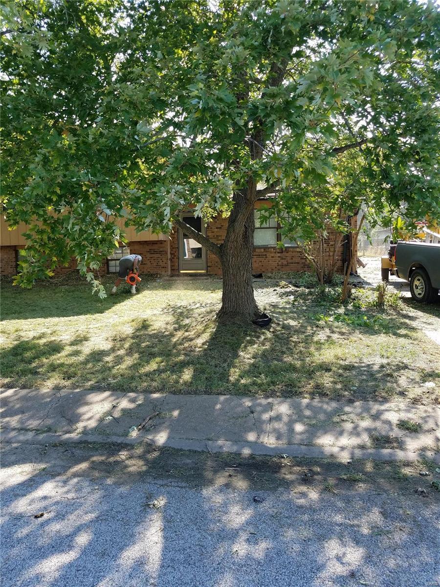 1996 oak tree Property Photo - Cahokia, IL real estate listing