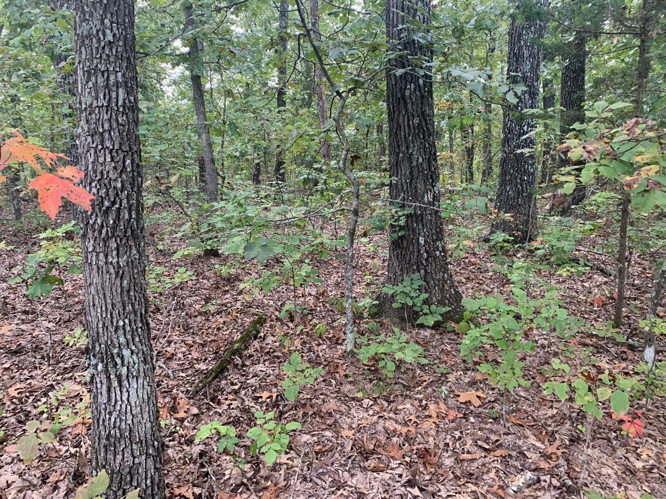 0 County Road 2120 Property Photo - Edgar Springs, MO real estate listing